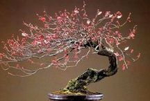 bonsai / Explore the remarkable art of bonsai and share inspirational examples - please see 'grow bonsai' board for cultivation and care tips (To join this board, please send a message or e-mail gardenlovers@zoho.com, and an invitation will follow shortly. Feel free to invite other members. Irrelevant pins will either be moved to a more appropriate board or will be removed. Please add pins and re-pin with consideration to other members. Have fun!)