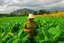 Vinales is more than Tobacco / Get relax in this area surrounded by nature