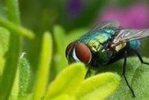 Anti-Insectes et Anti-Parasites / Toutes nos astuces pour éloigner les insectes et autres parasites. En plus, ils sont 100% naturels et économiques !
