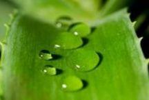 Remèdes Naturels / Astuces pour se soigner avec des produits naturels et des plantes médicinales sans avoir besoin de médicaments :-)