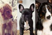 Kunterbunte Hundewelt / Hunde, WauWaus und Wuffis