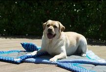 Lieblingsdecken für Hunde / #Hundedecken, #Hundebetten, #Liegedecken, #Hundezubehör, #Hundeaccessoires, #Heimtierbedarf, #Hund, #Hunde, #Welpen, #Welpe