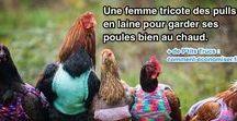 Astuces pour les Poules / Voici nos meilleures astuces naturelles et pas chères pour prendre soin de vos poules.