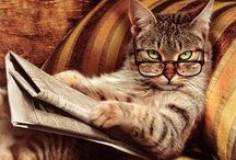 Animal: Cats & Claws-A Feline Point of View / Everything cats! / by Angie Rowe