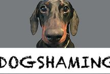 Animal: Hall of Shame / When Pets mess up or Shamed / by Angie Rowe