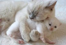 Animal: Mother's Love / Animal moms and babies. / by Angie Rowe