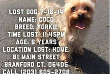 Animal: Missing Pets / Pets who have gotten lost or stolen. / by Angie Rowe