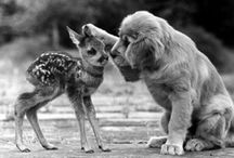 Animals and nature ;-) / So cute! / by Alayna Mahon
