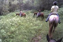 Redrock Trail Rides Horseback Riding / Horseback riding with Kathie Sullivan at Redrock Trail Rides. Kathie is amazing!! She has around 30 beautifully groomed, shiny and well-trained horses. She matches your horse to you based on your experience, etc. Her tack is gorgeous. Horse blankets match the bridle which matches the color of the horse's eyes (kidding). Rides are guided on your choice of gorgeous trails. Schedule a trail ride 608-823-7865 & reserve your stay at Justin Trails Resort near Sparta Wisconsin www.justintrails.com