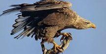 Hortobágyi Nemzeti Park / fajok,értékek