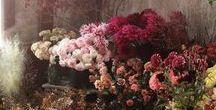 virágos jövőm / Hogyan termesszek vágó  virágot a kertemben? Slow flowering.