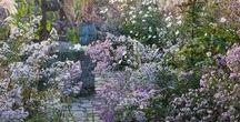 Kerti kívánságlistám / Fák, cserjék, rózsák és más évelők, száraz és kissé kötött talajú kertünkbe. A beültetés alapelve a természetközeliség. Preferáljuk az őshonosokat.
