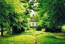 TREES / by Jane Mann