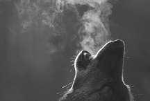 Wolves / by Michelle DePew