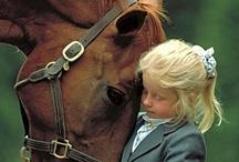 Horses,Horses and more Horses!!!!!! / by Tonya Thomas Talbert