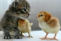 Soft & Cuddly Kitties!!!!