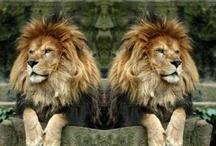 Lions!!!!
