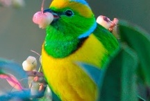 Colorful Birds!!!! / by Tonya Thomas Talbert