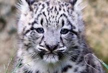 Fast Cheetahs!!!!