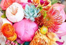 || PALETTE || AQUA & CORAL || / Duo Colour palette inspiration - aqua & coral x