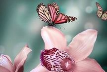 Pretty Butterfly / Butterflies and moths / by Denise Keeton
