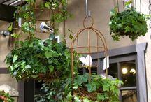 Indoor Green Ideas