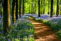A Hildon Spring