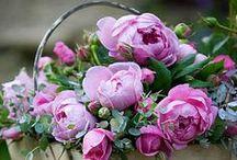 цветы пионы розы