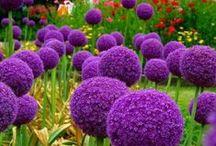 Декоративные растения / О декоративный растениях на участке. Кустарники, деревья.