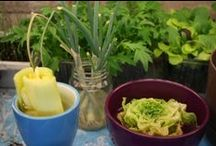 Growing Tricks in the Kitchen / Can you really regrow romaine, celery or green onions, etc. in your kitchen? Here are the claims.  I hope to test out some of them to see if they really work