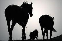 Horses {*Majestic creatures*}