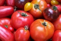Tomatoes / Eating and preserving tomatoes. Delicious recipes and great tomato preserves.