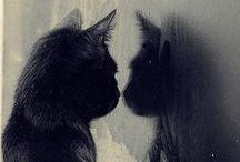 Bechanos / Cats