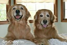 Golden retrievers / by Kori Barnett