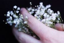 photo_gypsophila