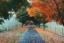 Autumn Leaves / Beautiful fall photo inspiration.