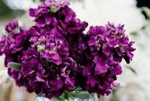 Radiant Orchid / The Pantone color of 2014 evokes stylish femininity with warmth and drama.