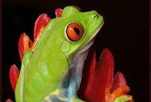 frogs(broscute) /
