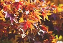 Autumn Wedding Ideas / Autumn wedding ideas and inspiration.