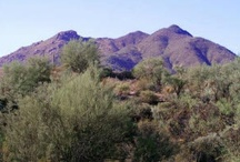 SDL Land Offerings / Better Homes and Gardens Real Estate Sonoran Desert Lifestyles land offerings.  These gorgeous lots are available for those looking to build their dream home.
