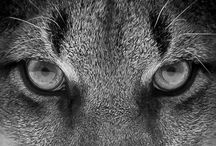 Cats / it all started with Nick Brandt ... / by Daniela Nomura