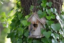 Bird houses I love / by Lucy Riggins