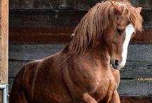 my hearts desire~horses