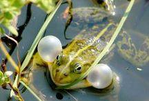 In de Sloot / Kikkers,eenden,en andere dieren,insecten in en om de sloot. Filmpjes,digibordlessen en computerspelletjes vind je op Yurls bij; Tineke Witlam.yurls.net