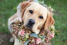 """Pets in Weddings  / A marriage unites not only two people, but two families as well. Your """"family"""" might have four legs and a furry coat, but you won't want them to miss the celebration! Here are some Wedding Inspirations from The Bride's Shoppe, Great Falls, MT, that will make you say """"Awwww!""""  www.thebridesshoppe.com"""