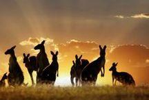 Australie en N-Zeeland / Kijk ook op Yurls bij;Tineke Witlam.yurls.net