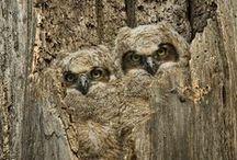 Camouflage..... / Schutkleuren Kijk ook op Yurls bij;Tineke Witlam.yurls.net