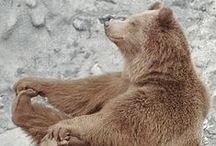 Brommende Beren... / Vanaf nu! Kijk voor Digibordlessen,computerspelletjes,filmpjes op Yurls bij; Tineke Witlam.yurls.net