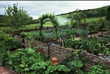 záhrada  prútie