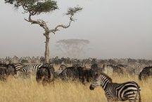 Afrique Subsaharienne / Riche de paysages grandioses, la Tanzanie recèle de trésors naturels qui ne manqueront pas de vous émerveiller. Pour une expérience « en immersion », séjournez dans un Lodge aussi luxueux qu'authentique, en plein cœur du parc du Serengeti.